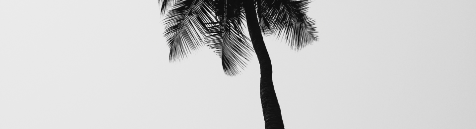 Black and White Picture of a Palm Tree by TheIncurableOptimist