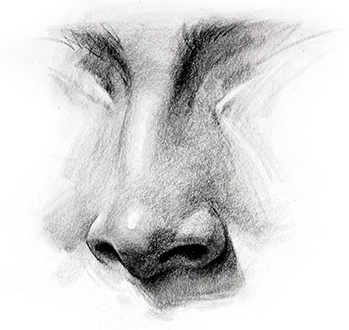 Black and White Nose Sketch